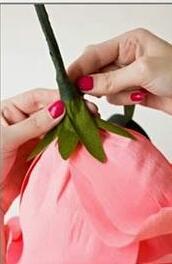 Cố định cuống hoa bằng băng dính xanh